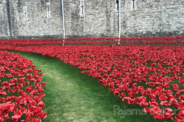 poppies06